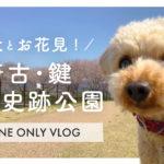 【犬とお花見】桜のある奈良の公園|唐古・鍵遺跡史跡公園