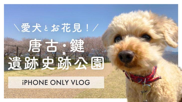 犬とお花見!唐古•鍵遺跡史跡公園