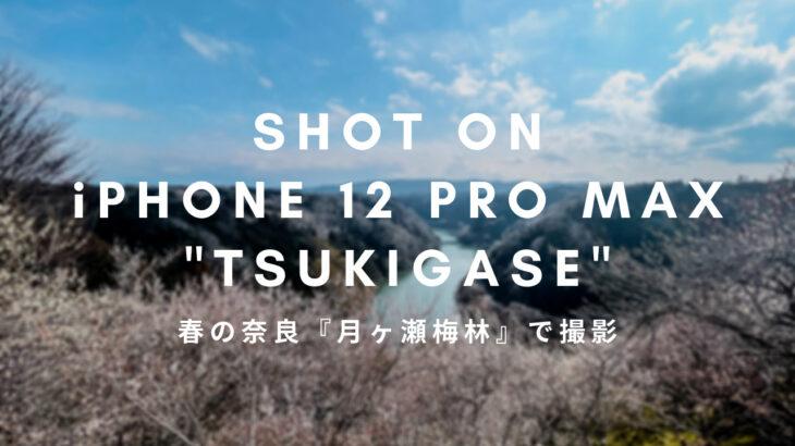 【春の奈良Vlog】梅満開 | 月ヶ瀬梅林【iPhone12ProMaxカメラで#shorts撮影】